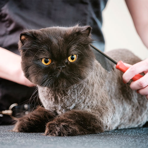 Cat and dog grooming in Skowhegan, ME.